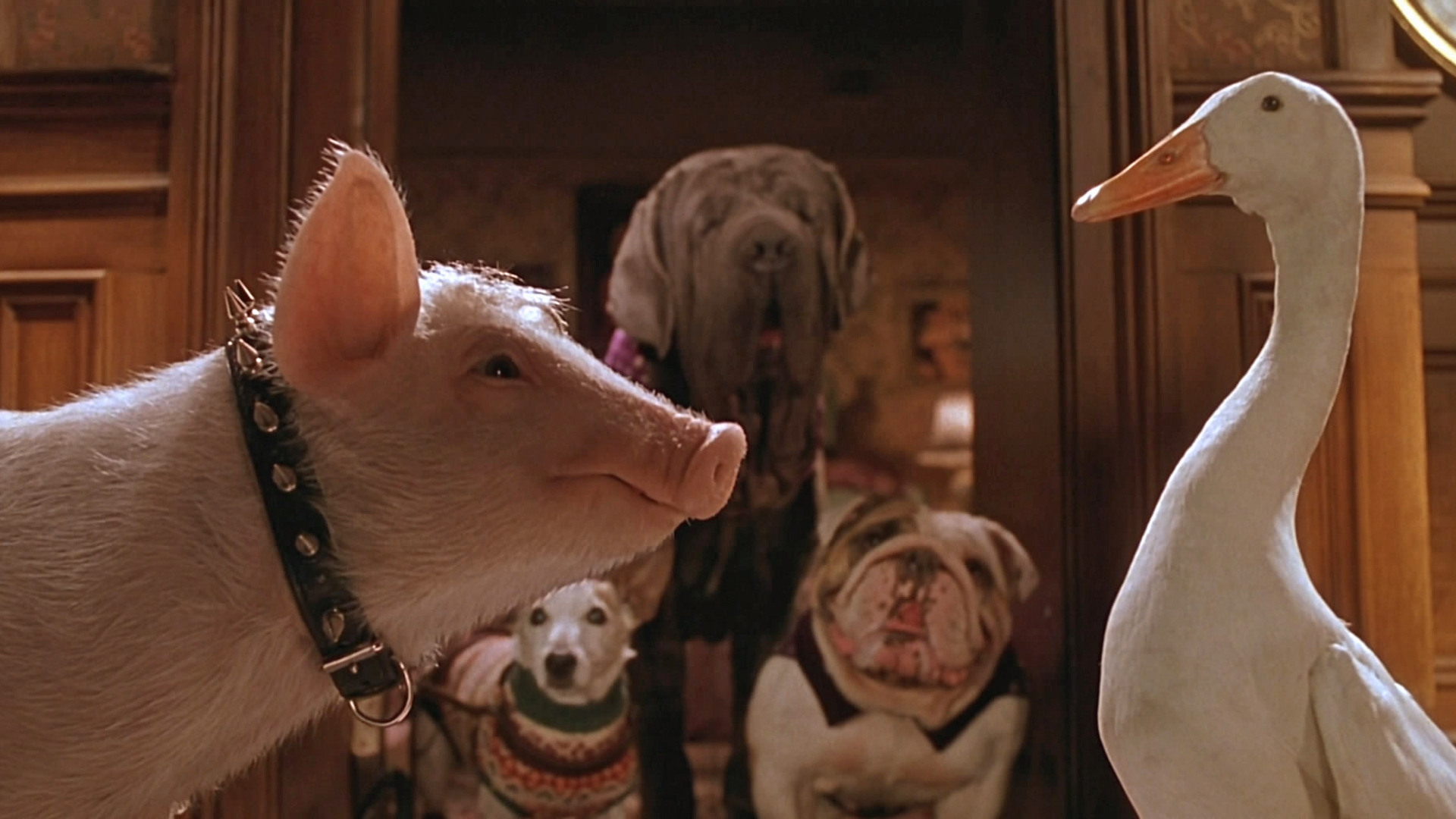 Babe le cochon dans la ville 1999 film cin s ries - Papa cochon a la piscine ...