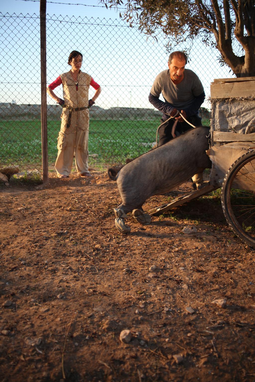 le cochon de gaza vostfr